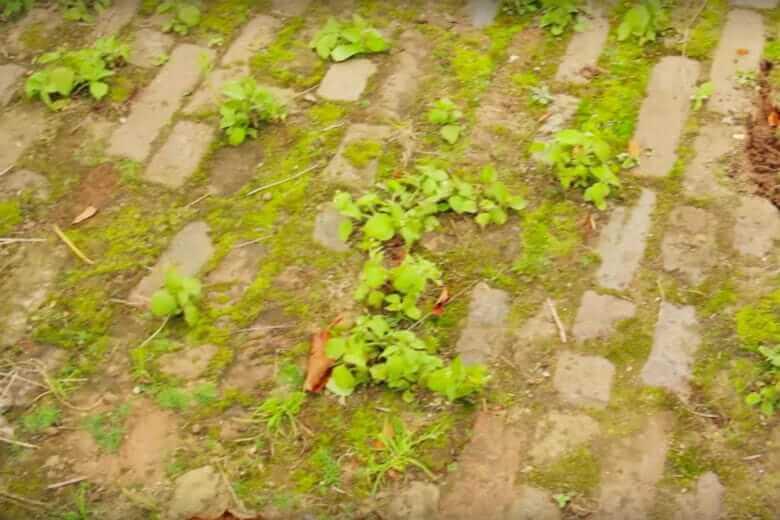 trucchetti erbacce giardino